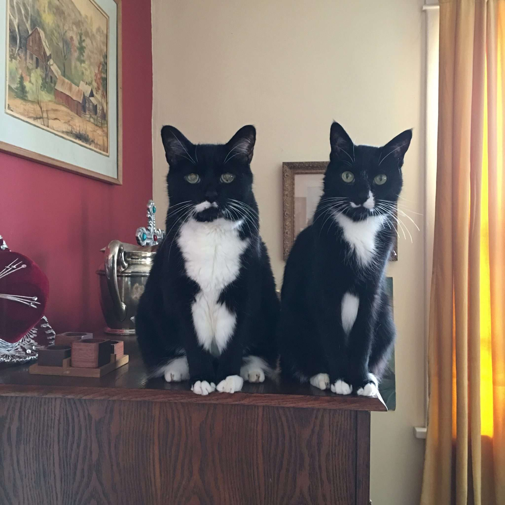 The Shiny Butter Blog | Marcus and —synchronized sitting