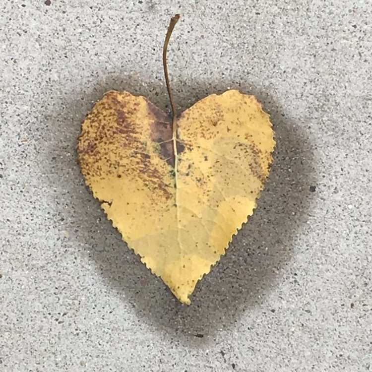 yellow leave on wet pavement