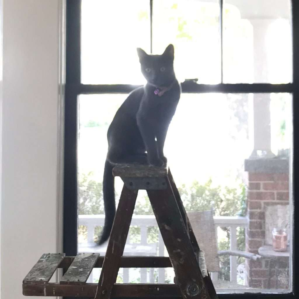 cat on a ladder in front of a window